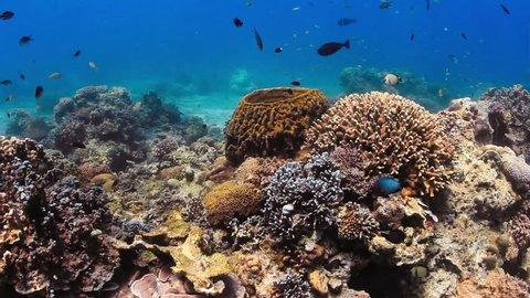 Tropical fish swim around a barrel sponge on a coral reef