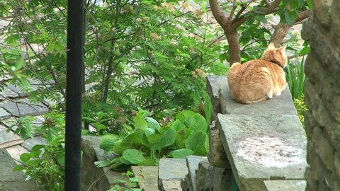 A ginger cat sitting on a garden wall backing onto a steep set of public steps.