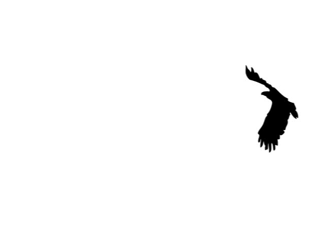 Silhouette of flying bird.  (Alpha Channel included).