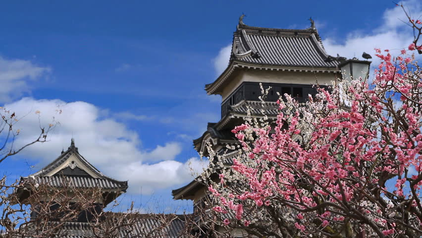 Japanese castle and plum blossoms in full bloom.