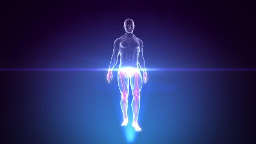Human Anatomy WALKING Scan in 3D x-ray - LOOP | Shutterstock HD Video #3985960