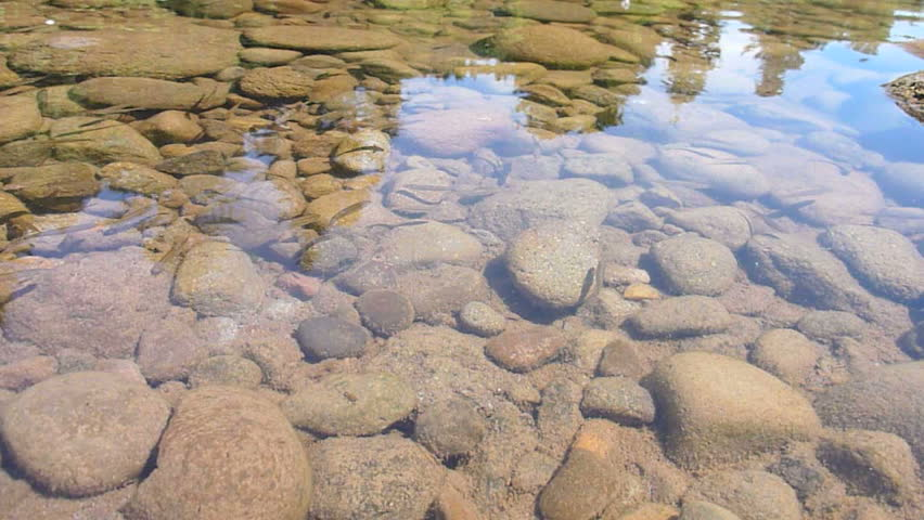 A School Of Minnows Swimming In Shallow River Bed