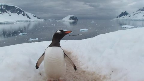Penguin Highway in Antarctica