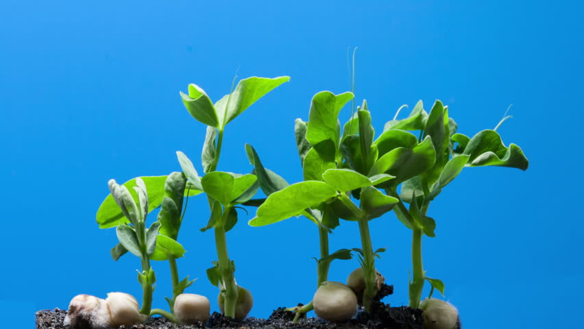 The growth of young green plants