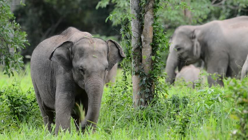 Elephant thailand | Shutterstock HD Video #4482710