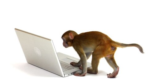 Monkey looking at laptop computer