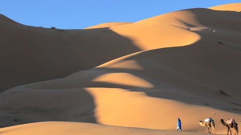 Desert merchant in local Touareg clothing walking with camel train in the Sahara Desert, Morocco, Africa