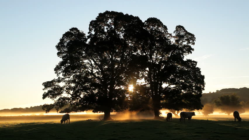 Sun breaks through trees as it rises over a field and herd of cows in silhouette at dawn in Usk Valley, South Wales, United Kingdom