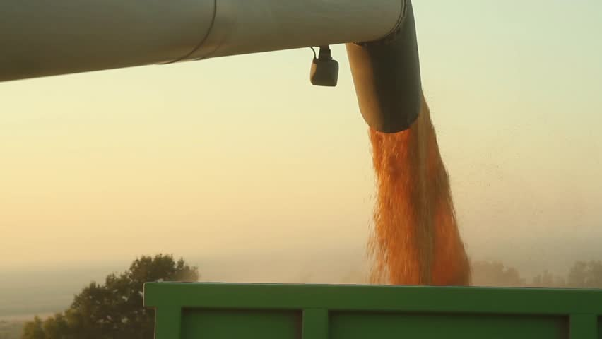 Agriculture Concept Harvesting Seed Pouring Machinery HD | Shutterstock HD Video #4654370
