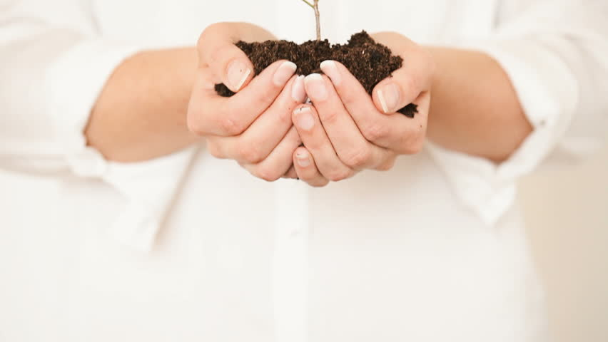 Handful of Soil with Young Plant Growing. Concept and symbol of growth, care, sustainability, prot