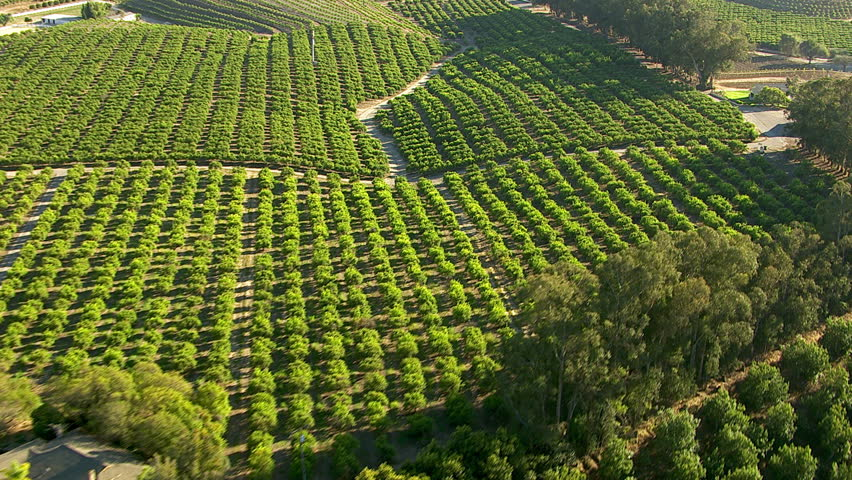 Aerial shot of orange groves and farm land