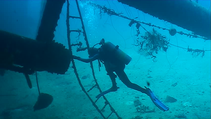 Caribbean Sea Life | Shutterstock HD Video #471142