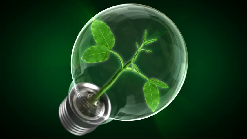 Green Energy Concept. Pure Energy. Tree growing inside a light bulb.  | Shutterstock HD Video #4769612