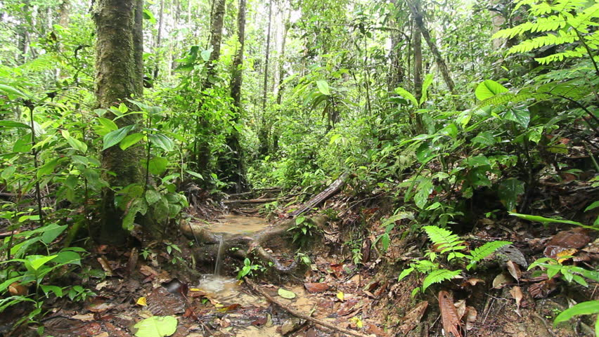 Water Running On The Rainforest Floor After Heavy Rain In The Ecuadorian  Amazon. Stock Footage Video 4776980 | Shutterstock