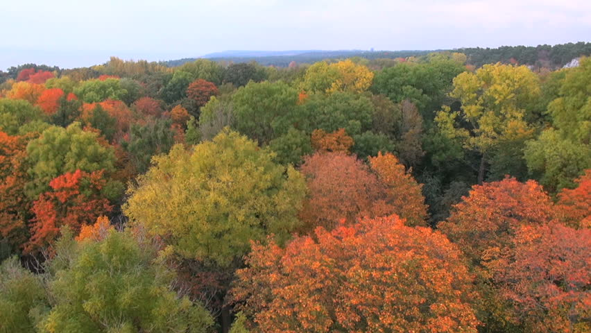 Autumn Forest Canopy, Drone Footage