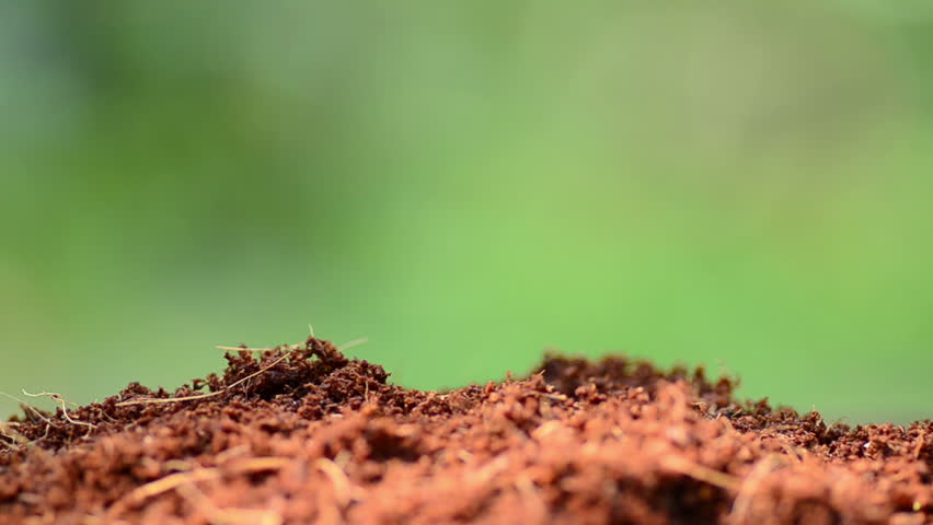 Close up male hand seeding tree for Plant Propagation
