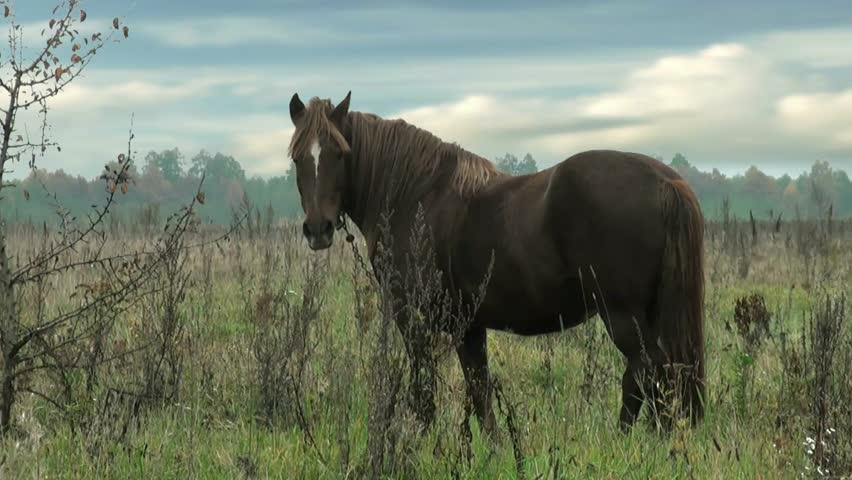 Horse grazes on leash | Shutterstock HD Video #4957700