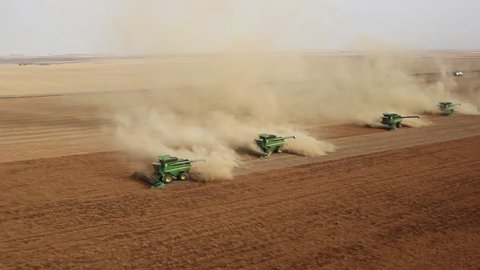 Four combines harvesting lentil field on the Saskatchewan Prairie