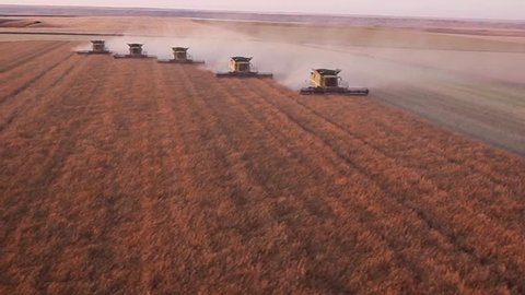 Five combines harvest large canola field on Saskatchewan prairie