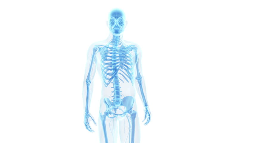 Animation showing pain in the lower back   Shutterstock HD Video #5040050