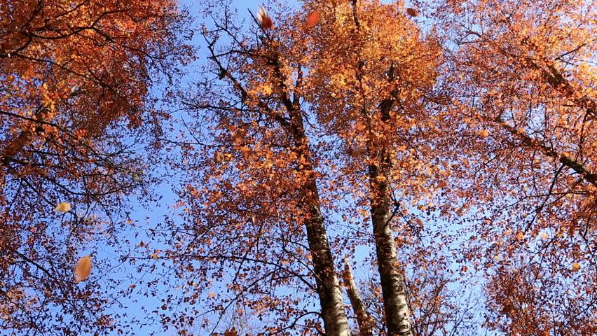 falling leaves forest in golden autumn season