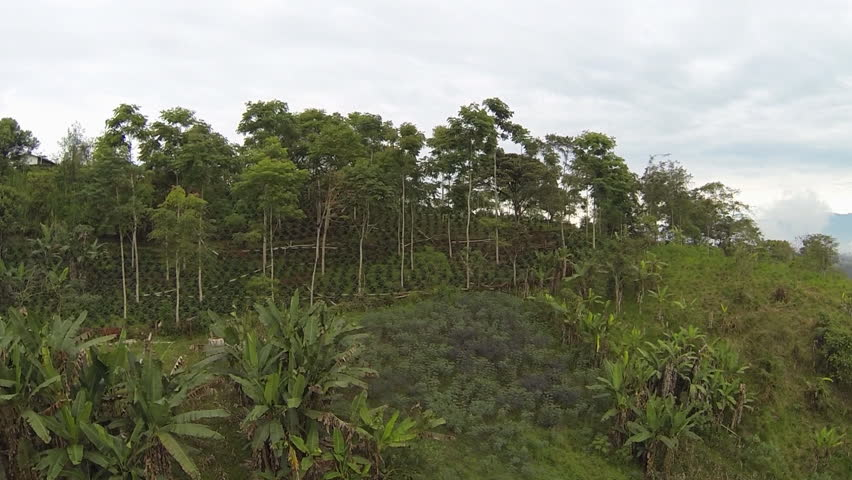 Aerial shot of a shade-grown coffee plantation on the western slopes of the Andes in Ecuador