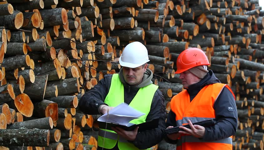Forest employee near stacks of logs episode 4