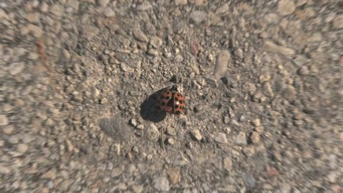 Beginning with a close up of a ladybug on the pavement, then zooming out to reveal the entire earth, sun, and the Milky Way galaxy.  Texture maps and space images courtesy of NASA (www.nasa.gov)