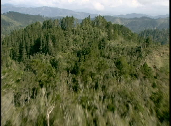 aerial of pine tree forest of the beautiful northwest area of the U.S.
