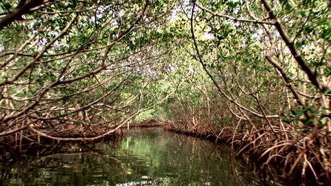 Kayaking through a mangrove tunnel in Florida