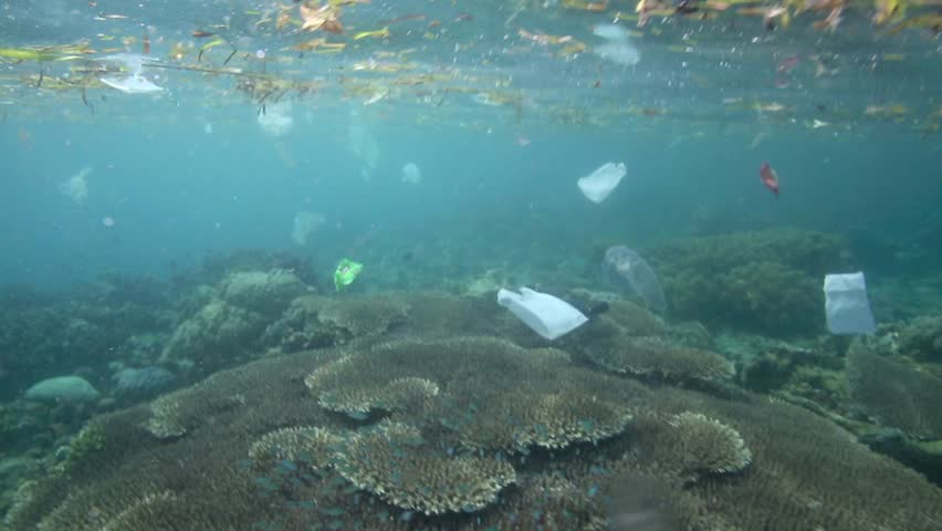 Plastic garbage and other debris floating underwater over fragile coral reef in Bunaken Island, Sulawesi #5402330