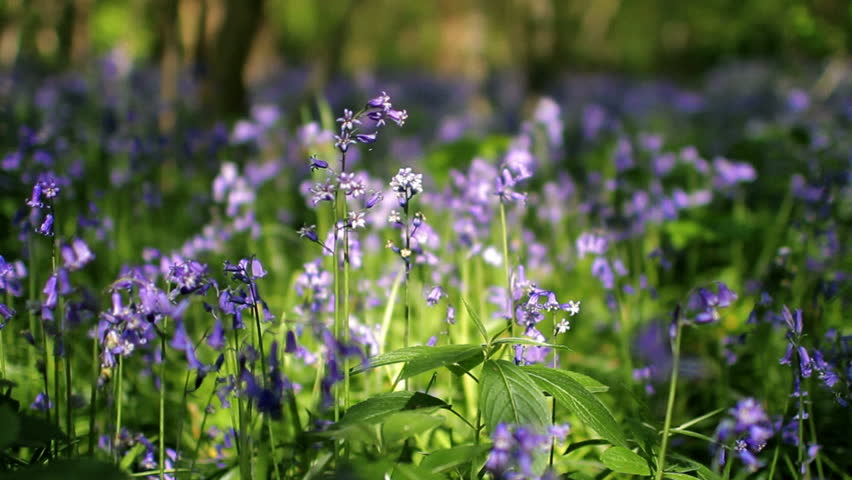 Spring Countryside Flowers Stock Footage Video (100% Royalty-free) 5402540 | Shutterstock