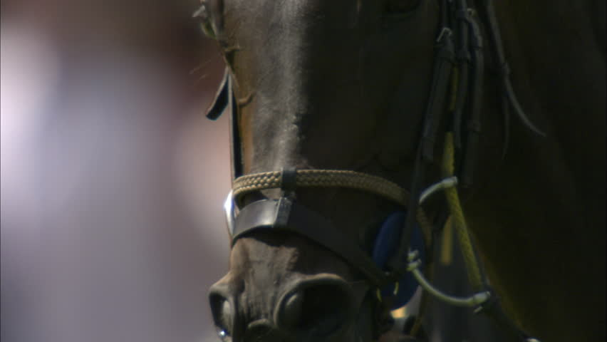 Slow motion shot of a horse's head & face during a Polo match