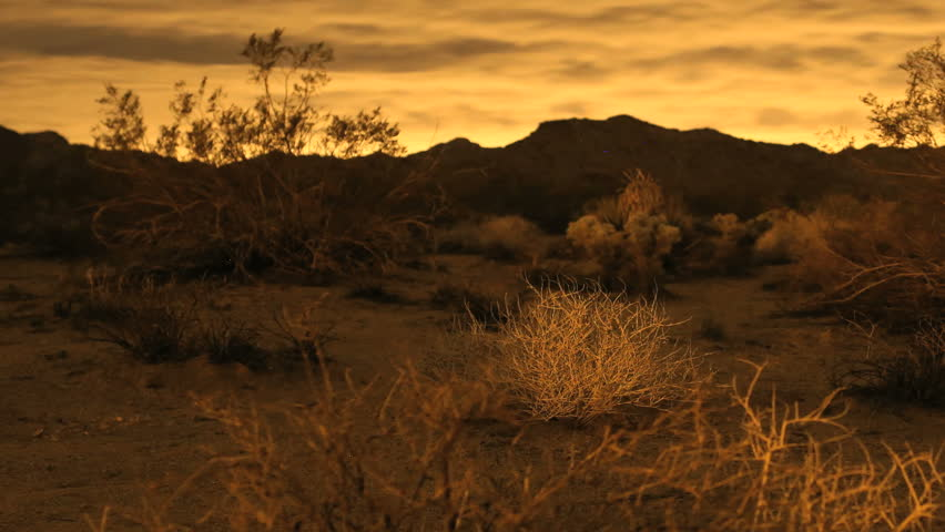 Golden Desert Sunset Clouds Time lapse with Cactus and Desert Plants in Foreground at Joshua Tree Park