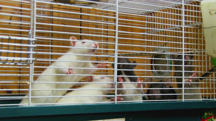 A person feeding rats in the cell | Shutterstock HD Video #5558900