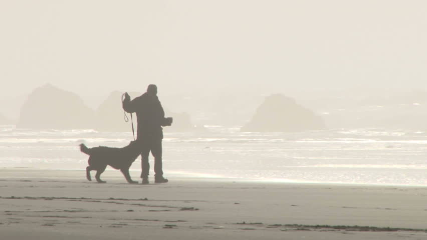 Happy dog jumping for leash that dog owner carries while they walk alone sunny beach shore.