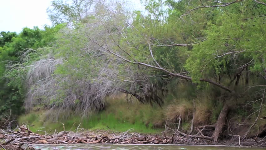 Blowing Up Beaver Dam (without harming any beavers)