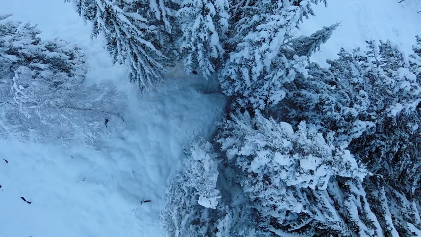 trees woods forest. snow winter season. beautiful nature. fly over. aerial view