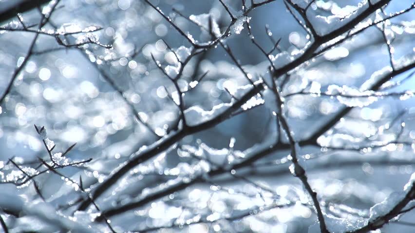 snow winter trees. snowing snowy. sunset dusk sunshine. woods forest. nature. slow motion. winter background. romantic wonderland. beautiful environment