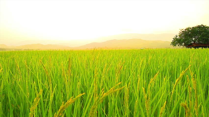 Green Farmer High Quality Food