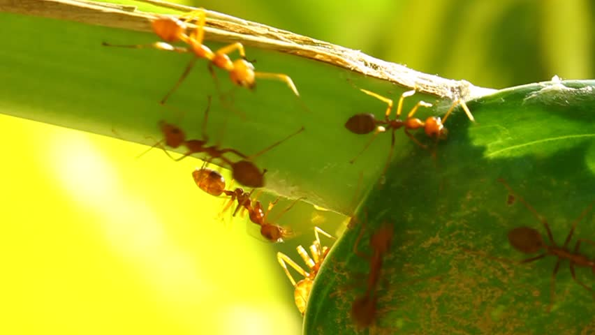 ants and tension free life In the present world , tension , stress, worry, anxiety, fear has become very common  most of the people have excepted them as a part of their daily life and they say that it can not be avoided but there is a formula to live a tension free life.