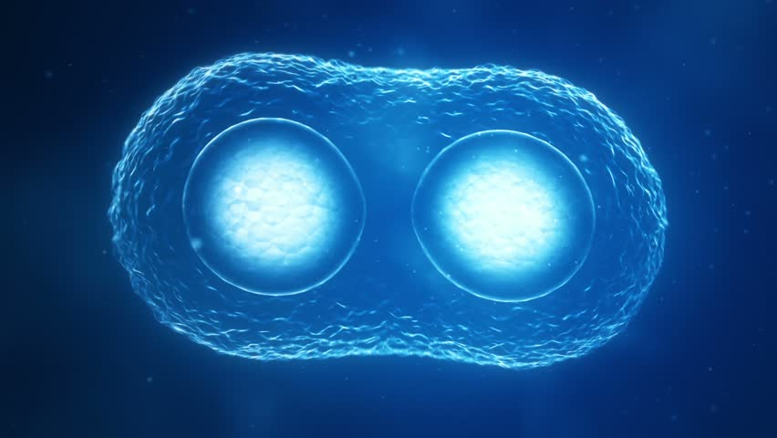 Cells Dividing | Shutterstock HD Video #5628560
