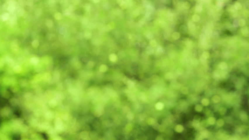 Genuine nature background of green leafs slowly swinging in the wind