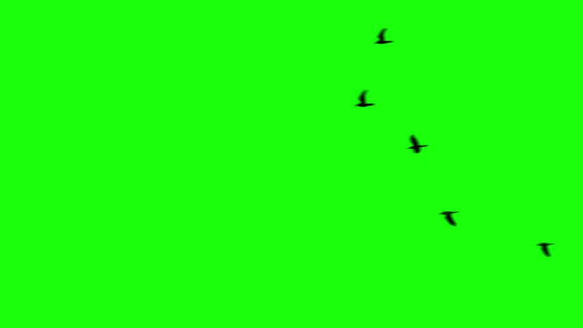 Flock of Ravens, Chroma Key
