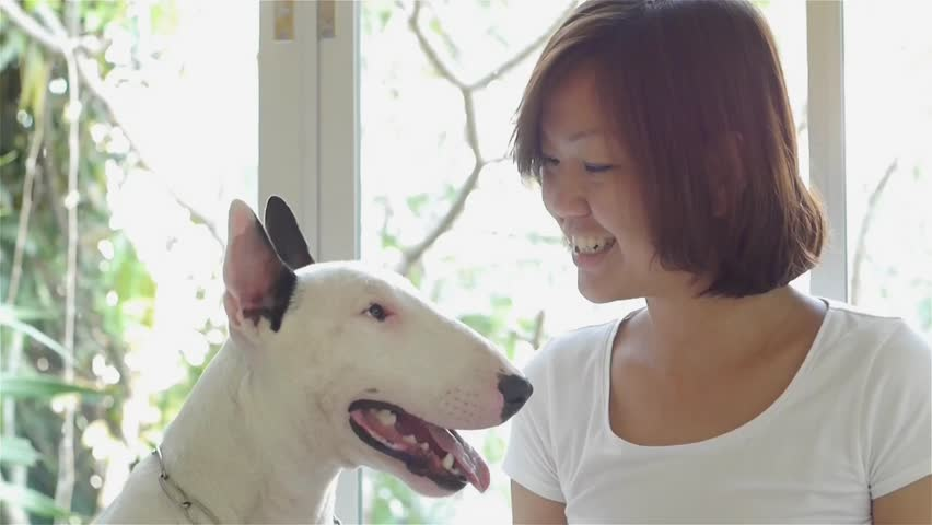 Asian woman using her tablet and her bull terrier dog looking on tablet.