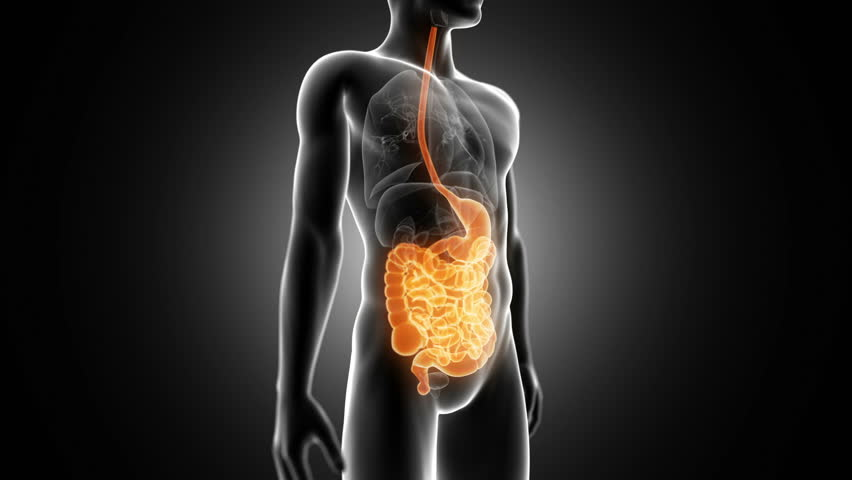 Footage of a female human digestive system stock footage video rotational animation showing the male digestive system hd stock video clip ccuart Choice Image