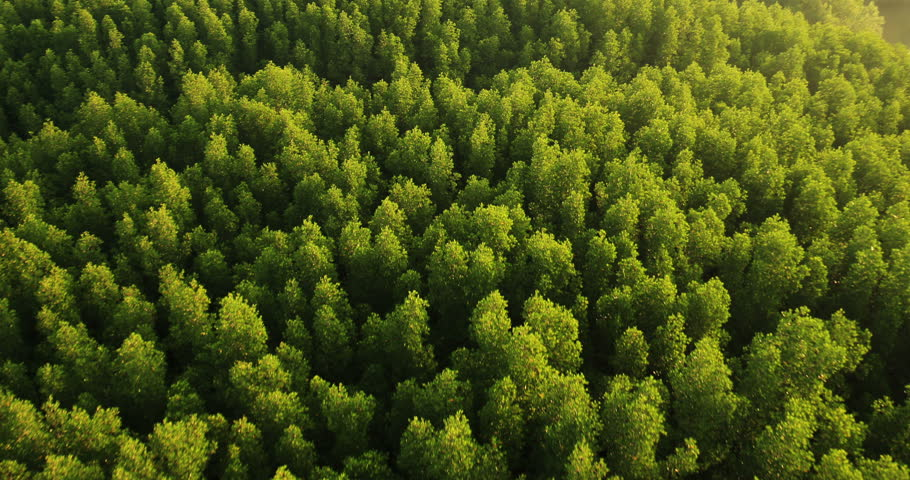 Aerial View: Mangrove forest in Krabi province, Thailand. February 2014. Krabi is southern province on Thailand's Andaman seaboard. The region derives much of its income from tourism.