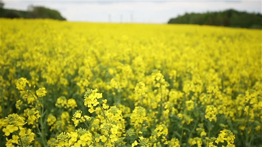 Header of canola