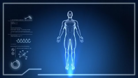 3D Animation of Human Body Anatomical scan on digital Screen Loop