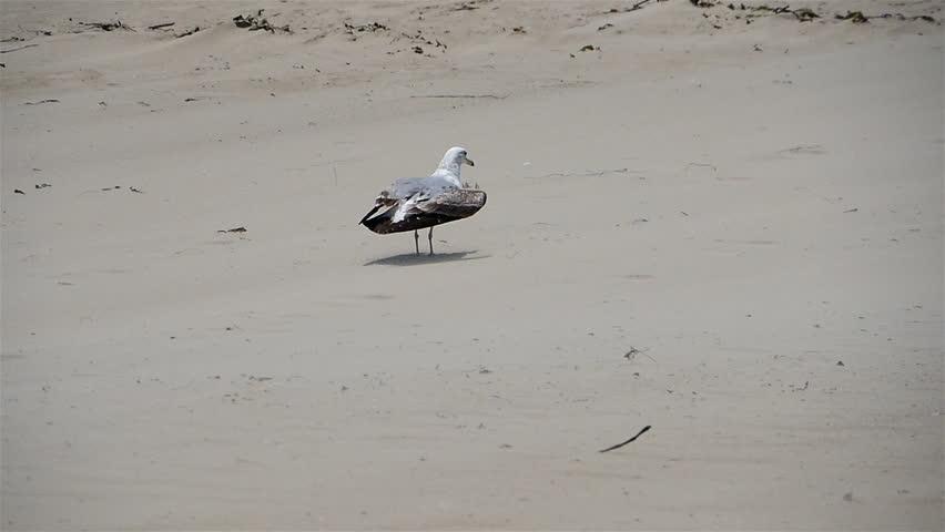 Seagulls 96fps 11 Slow Motion x4 | Shutterstock HD Video #6464210